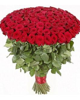 101 красная высокая элитная роза 80 см